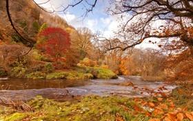 Обои осень, лес, деревья, река, течение, берега, красно-жёлтая листва