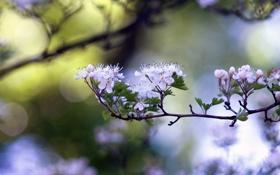 Картинка листья, цветы, природа, фото, фон, обои, ветка