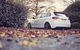 Картинка дорога, осень, листья, Desktop, cars, auto, wallpapers