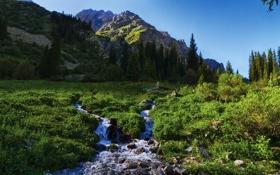 Обои трава, пейзаж, горы, природа, ручей, фото, Kyrgyzstan