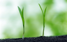 Картинка зелень, трава, макро, природа, жизнь, ростки, земля