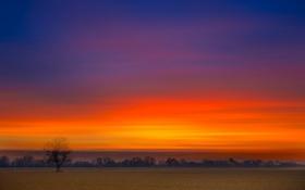Картинка поле, небо, облака, дерево, вечер, зарево