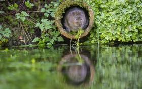 Обои water, plants, green, Pipe, The rat molehill