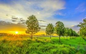 Картинка закат, пейзаж, деревья, рассвет, фото, природа, поля