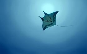 Картинка море, животные, вода, рыбы, океан, рыба, подводный мир