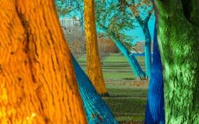 Обои город, трава, деревья, краска, ствол, парк, цвет