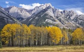 Обои осень, лес, небо, листья, горы, Колорадо, США
