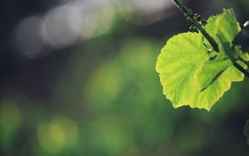 Обои лето свежесть, весна, листочки, листочек, природа, зелень