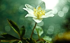 Картинка цветок, фото, фон, обои, растение, эффекты, ракурс