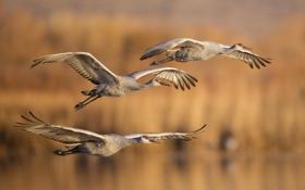 Картинка осень, птицы, полёт