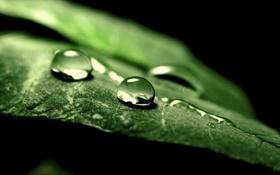 Обои капли, листик, обои, природа, фон, зелень, макро