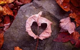 Картинка осень, листья, любовь, лист, земля, камень, рамка