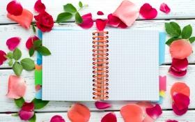 Картинка листья, розы, лепестки, тетрадь