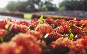 Обои солнце, цветы, лепестки, оранжевые