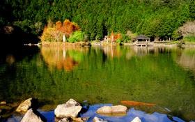 Обои лес, природа, беседка, парк, озеро, камни