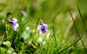 Обои трава, макро, цветы, природа, растения