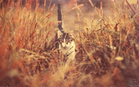 Обои трава, глаза, кот, котенок, мордочка, хвост, идет