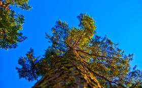 Обои небо, дерево, ствол, крона