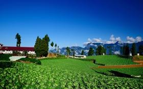 Обои зелень, облака, деревья, горы, поля, дома, растения