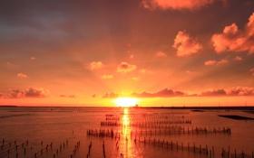 Картинка море, солнце, свет, сети, дорожка, залив, мелководья