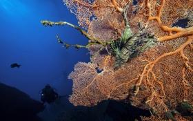 Картинка море, природа, рыба