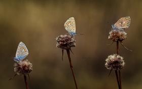 Картинка бабочки, крылья, размытость, три, цветки
