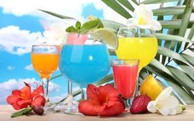 Обои море, коктейль, фрукты, fresh, drink, cocktail, fruits