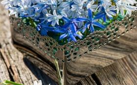 Обои wood, flowers, spring, basket, гиацинты