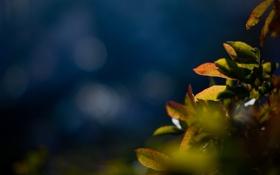 Картинка листья, макро, синий, природа, фото, фон, растения