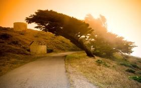 Картинка дорога, деревья, пейзаж, закат, природа