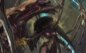 Картинка монстр, queen of blades, starcraft 2, zerg, девушка, starcraft, арт