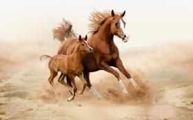Картинка поле, лошади, детеныш, мама