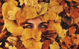 Картинка осень, глаза, взгляд, листья, фон
