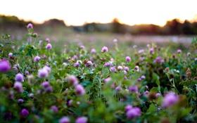 Обои поле, природа, травы