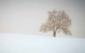 Картинка снег, туман, дерево