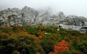 Обои Горы, Туман, Осень, Скалы, Деревья, Гора, Лес