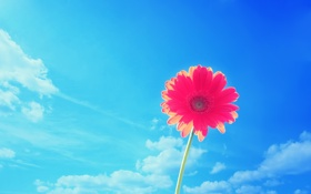 Обои цветок, небо, лепесток