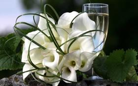Картинка белый, листья, цветы, зеленый, бокал, цвет, букет