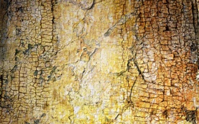 Картинка стена, текстура, фон, цвет