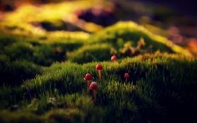 Картинка трава, грибы, Макро, StoneOcean