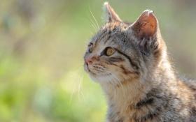 Обои кот, морда, солнце, зелень, кошка, фокус