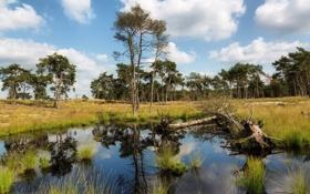 Картинка лето, деревья, пейзаж, природа, озеро