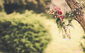 Картинка цветы, дерево, банка