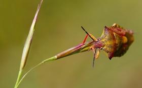 Картинка растение, жук, насекомое, травинка