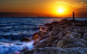 Картинка море, солнце, закат, камни, птица, прибой