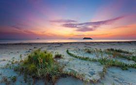 Картинка песок, пляж, пейзаж, природа, океан, рассвет, растения