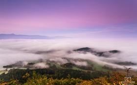 Картинка лес, облака, закат, природа, высота, сумерки