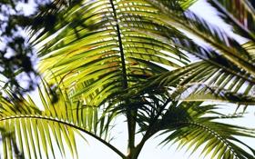 Обои пальма, листья, ветки
