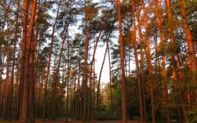 Обои дорога, лес, деревья