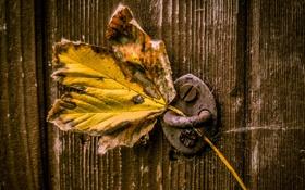 Обои макро, лист, дверь